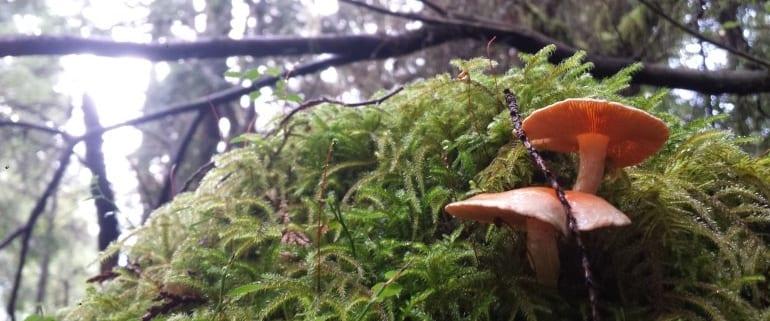 Mushrooms of the West Coast – Raincoast Education Society