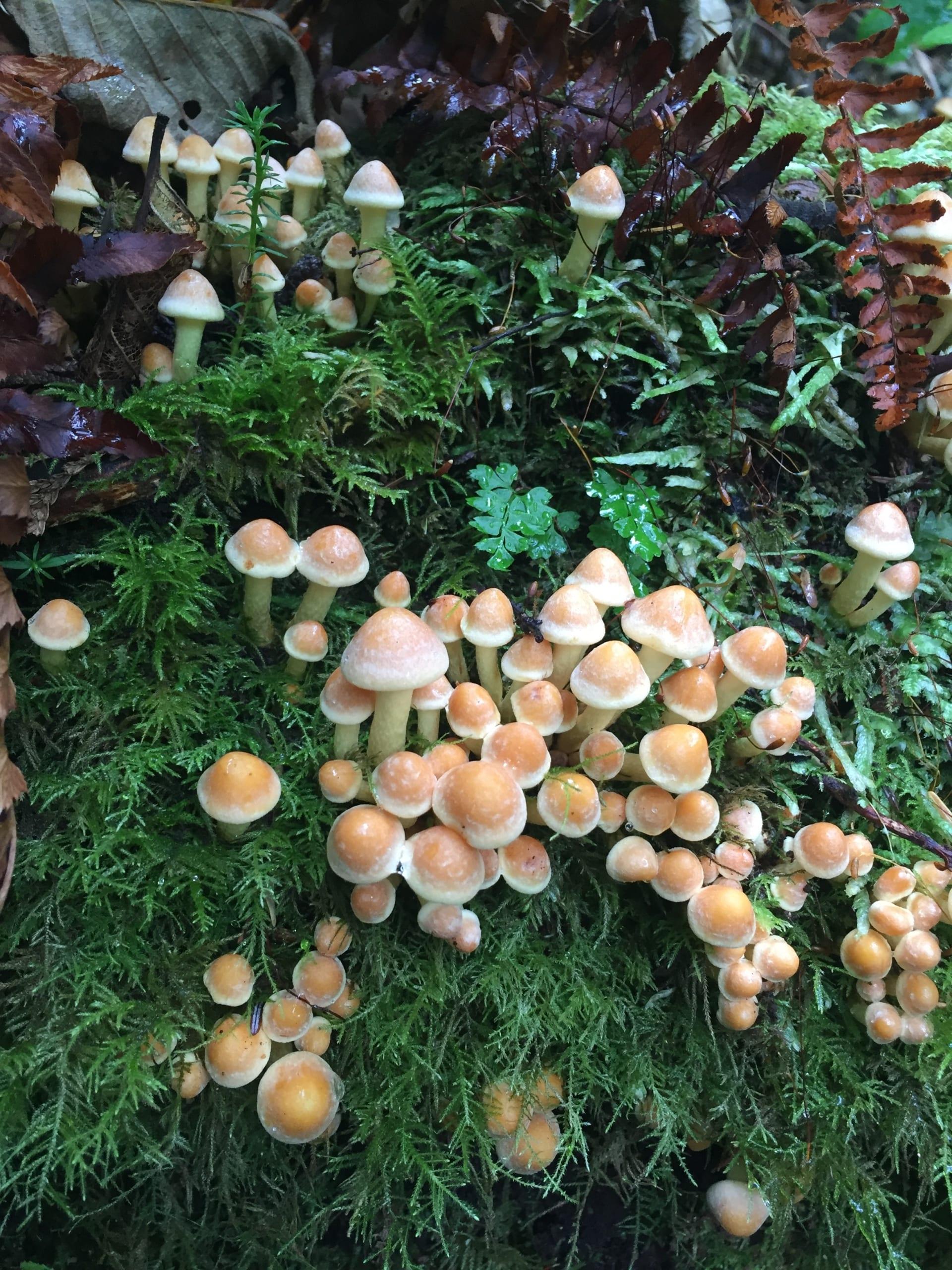 Clustered Woodlovers