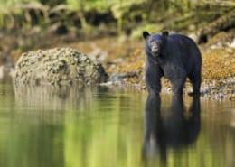 Black Bear Matthew Maran