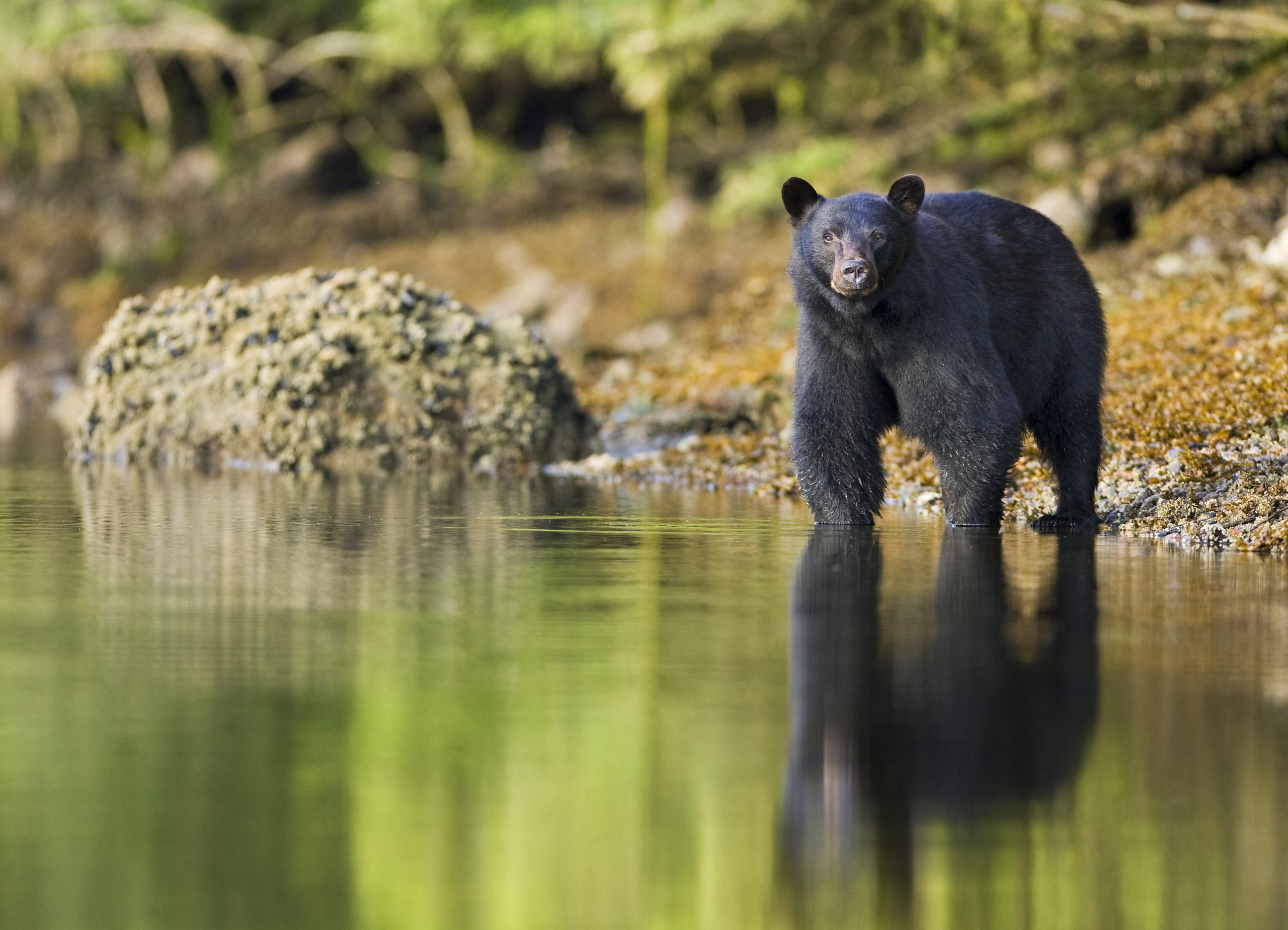 Black Bear Matthew Maran