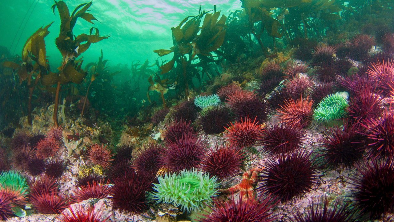 Urchins by Dane Stabel
