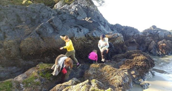 Rocky intertidal field trip